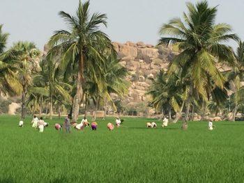 田の雑草を抜く人々